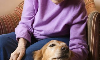 Helping Your Mom's Pet Acclimate to Someone New in the House